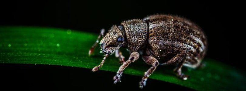pour l'achat d'insecte grillon criquet ou vers de farine vivants au meilleur prix