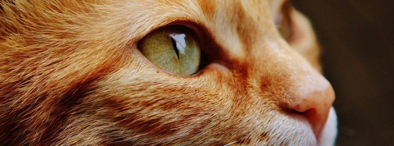 FlairAssur.com : comparateur pour animal de compagnie