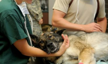 Geoallo urgence vétérinaire, ttrouver votre vétérinaire d'urgence