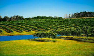 Profiter des conseils en irrigation