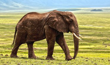 Ecosafaris : tourisme responsable en Namibie