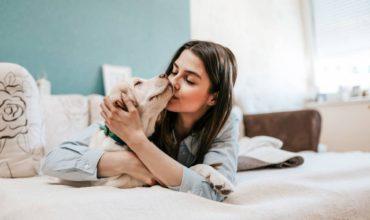 Medpets.fr, la pharmacie vétérinaire et animalerie en ligne