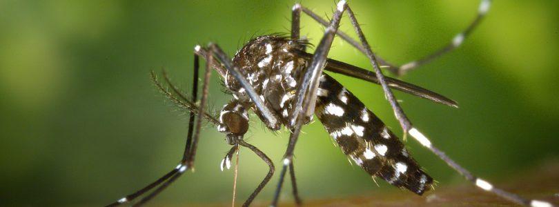 Lutte contre le moustique le tigre