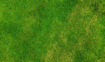 Spécialiste en création de gazon et entretien de pelouse