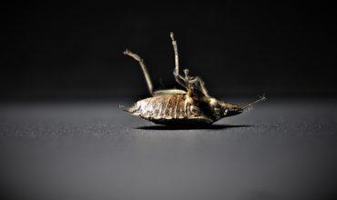 Pro-Bug Détection, spécialistes de détection de punaises de lits en Hautes-Savoie