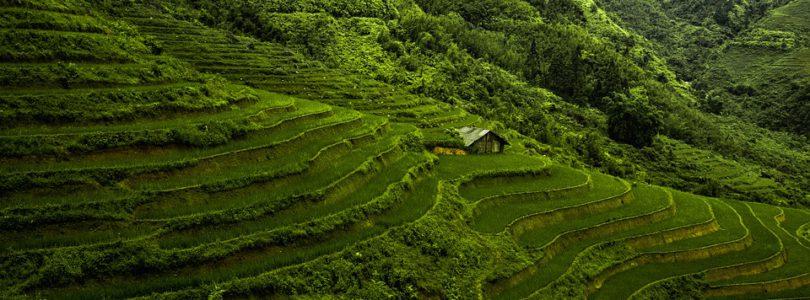 So Vietnam Travel, créateur de voyages personnalisés sur Vietnam