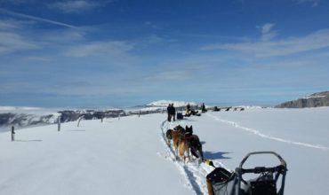 Mush and Rando, activités en chiens de traîneau dans le Vercors