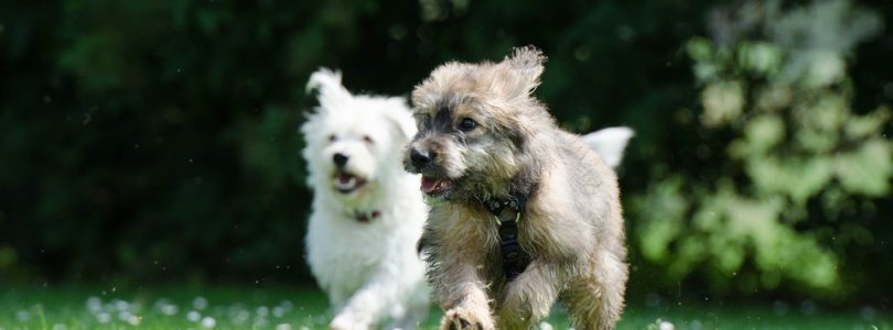 Pourquoi choisir l'entreprise garde de chien et pension à Antibes ?