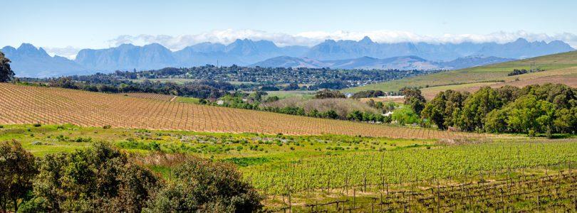 Vente de domaines viticoles dans le sud de la France