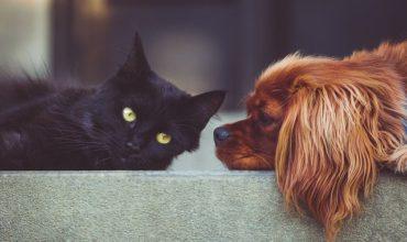 Services de pension pour chien et pour chat