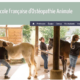 EFOA: école pour devenir ostéopathe pour animaux