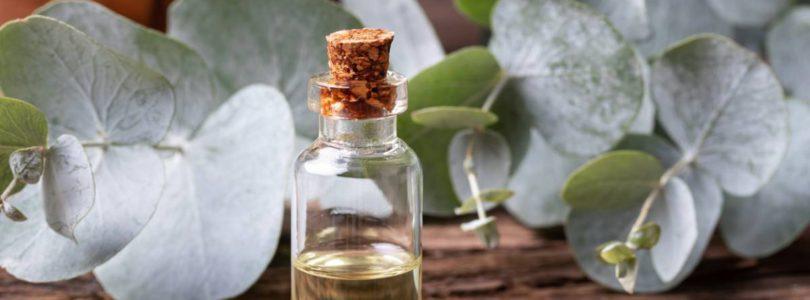 Huileessentielle.info : un blog dédié aux huiles essentielles